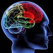 La literatura clásica estimula la actividad cerebral