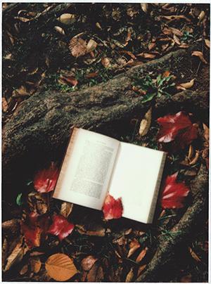 3 lecturas para volver a lo íntimo desde el arte